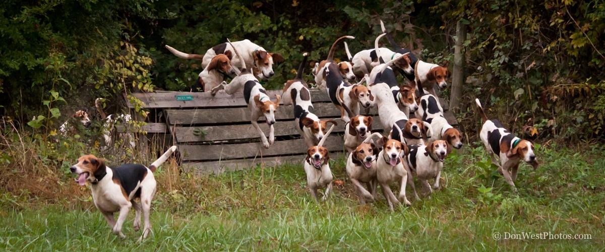 Home Tryonhounds Com